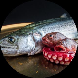 魚/瀬戸内海産